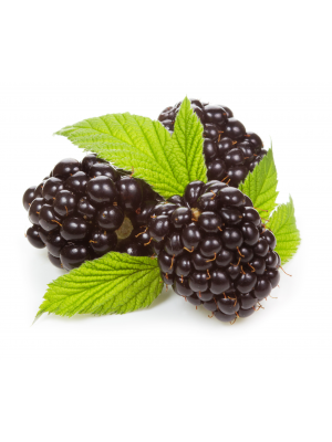 Organic fresh blackberry.